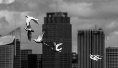 """DOVES and TALL BUILDINGS"" - J"