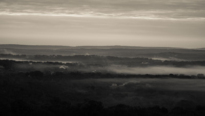 B&W - Early Morning Fog - Dale Wood