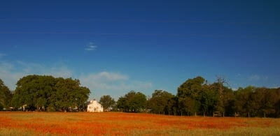Color - Red Field, White House - Homer Gilbert