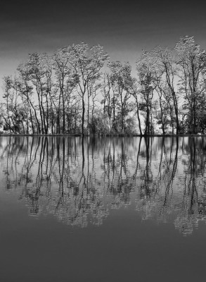 """Reflections in Black and White"" by Sandy Gilbert"