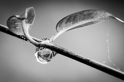 """Water Drop"" by Ralph Nordenhold"