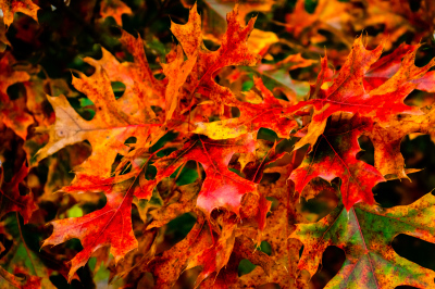 Autumn Leaves by Ralph Nordenhold