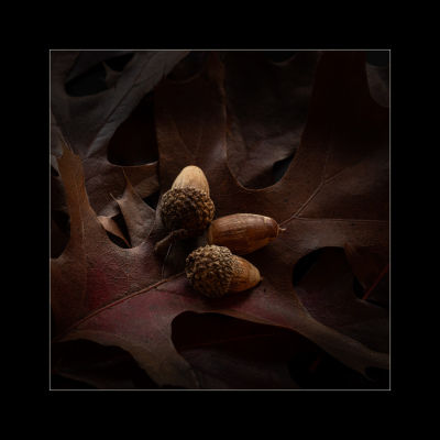 Fall Bounty by Ralph Nordenhold