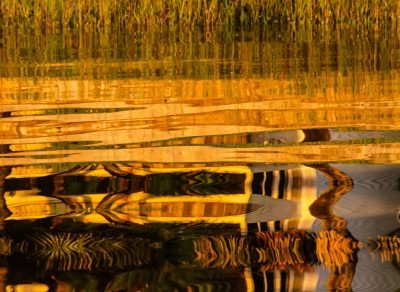 Golden Ripples and Reflections by Sandy Gilbert